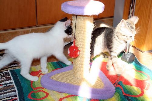 Donatella, gatita parda dulce y guapetona nacida en Abril´19, en adopción. Valencia. ADOPTADA. 48168024507_d8a70ec1e9