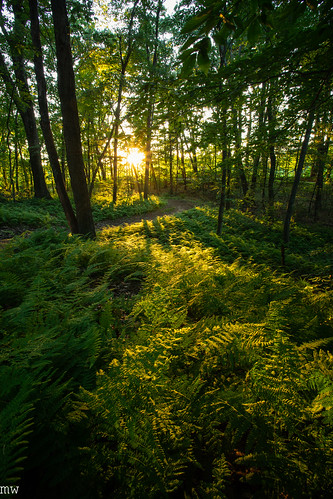 great brook farm state park massachusetts carlisle sunset ferns forest