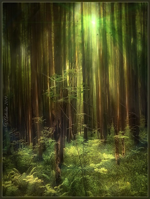 Forest tale.