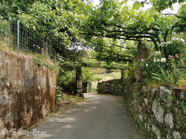 Camino Portugues-100813