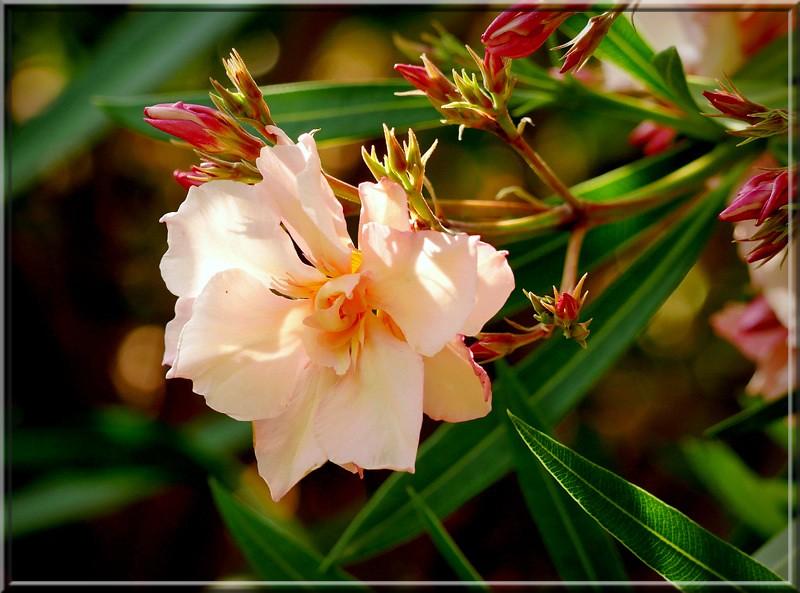 Au jardin des plantes. 48168808072_77ce1400db_b