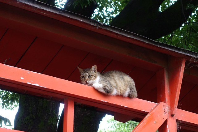 Today's Cat@2019-07-01