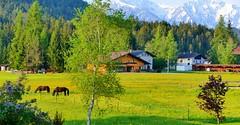 Platzl (Leutasch, Tirol, AUS) – Qu'elle était verte…