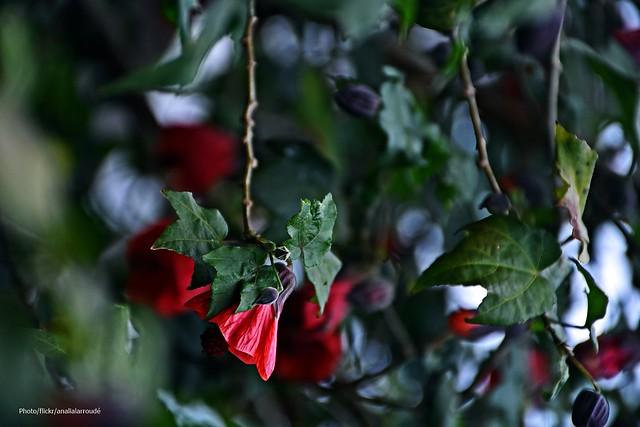 invierno en rojo (2)----- Explore