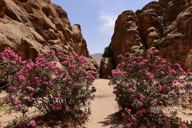 Petra, Jordan, June 2019 653