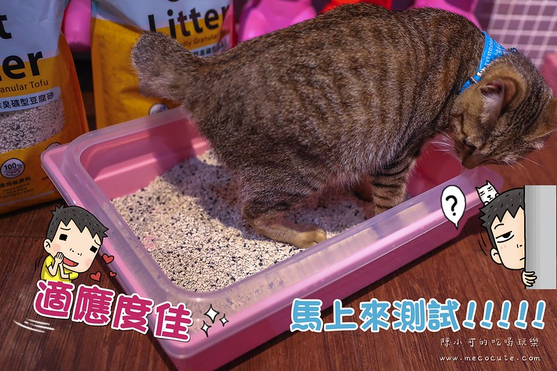 天然除臭礦型豆腐砂,豆腐砂推薦,貓砂推薦,防御工事,防御工事貓砂 @陳小可的吃喝玩樂