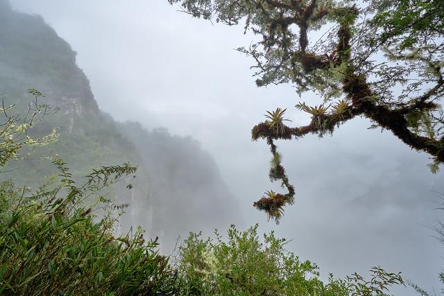 Inca Bridge Trail through the Cloud Forest - Machu Picchu, Peru