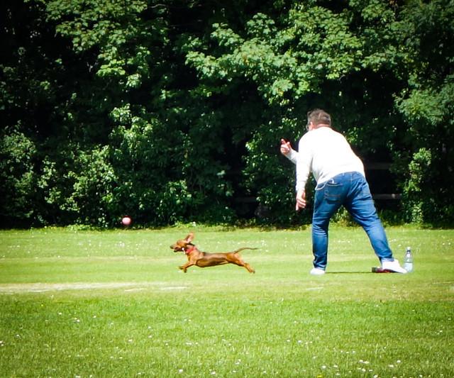 Fetch! Abbey Recreation Ground, South Wimbledon