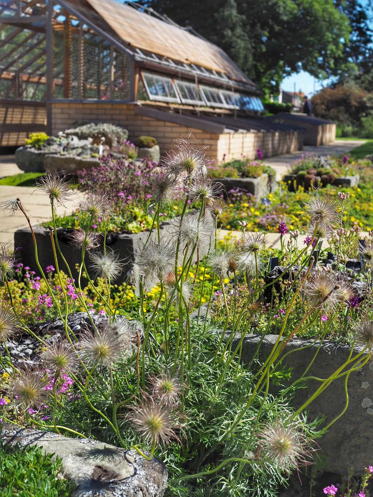 kasvitieteellinen-puutarha-skotlanti