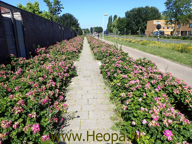 2019-06-28 Almeerderhout, Nobelhorst 10 Km (29)