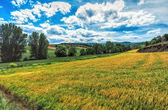 La Rioja.  Campos de cereal en primavera.