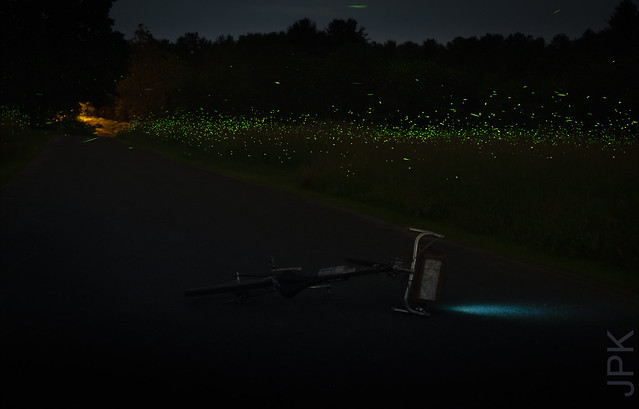 But, seriously: the fireflies this year...