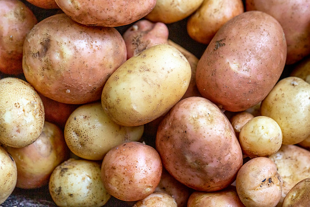Close up of ripe raw young potatoes