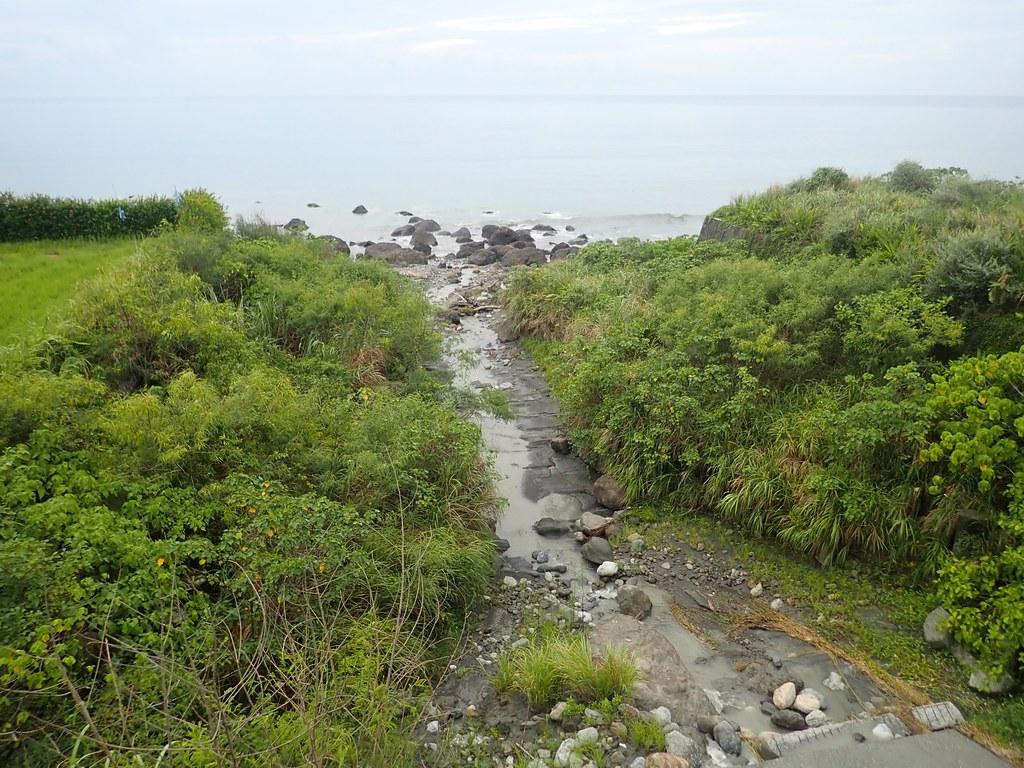 台灣東半部至南台灣臨海溪流洄游性生物多樣性高。圖片提供:洄瀾風生態有限公司