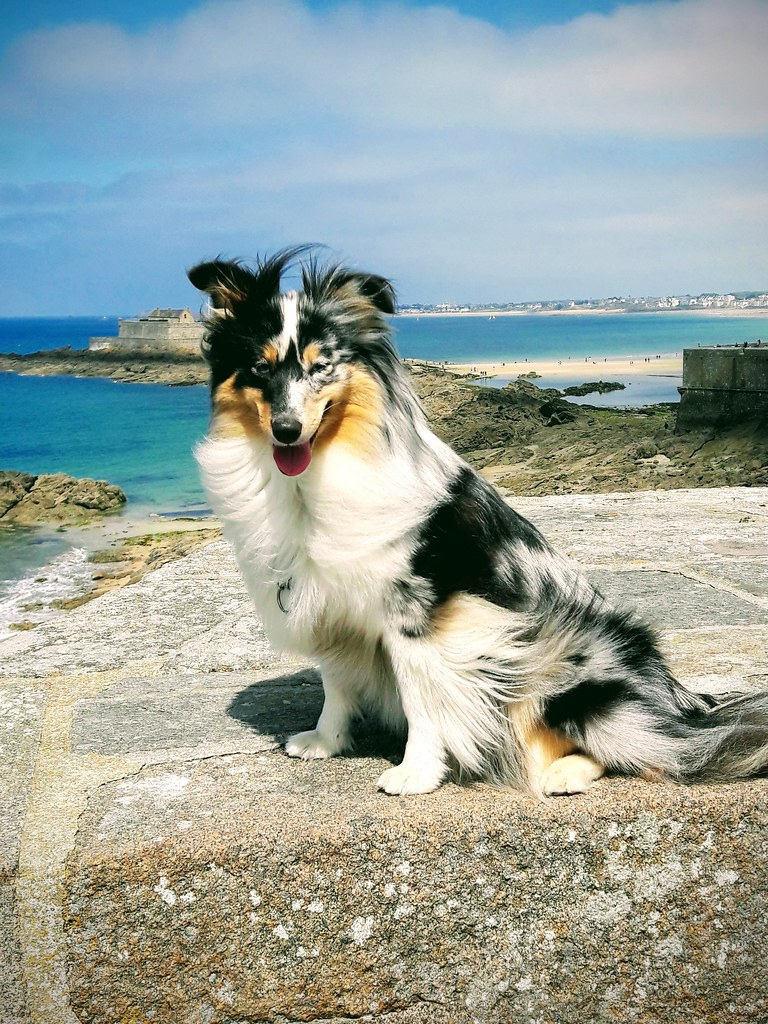La belle Zara de mon ami Carol en vacances en Bretagne