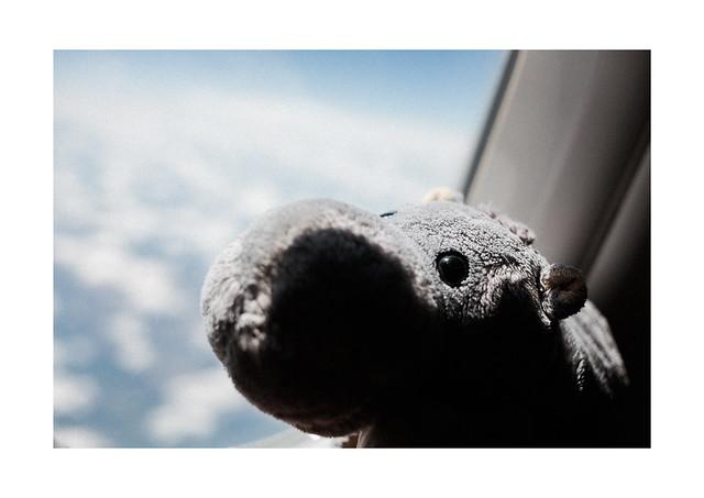 Wooti takes a Flight