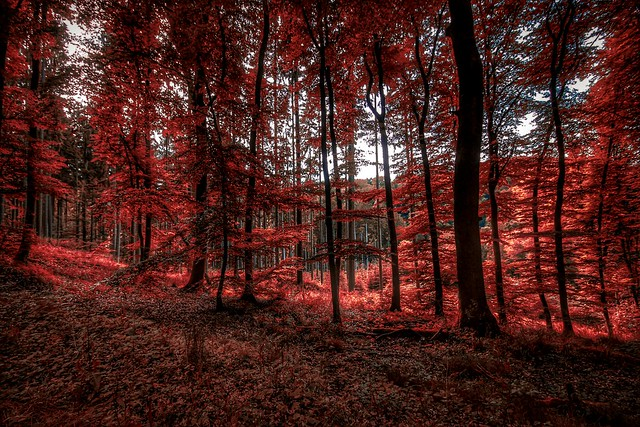 A forest red