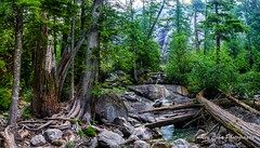 Canada forest