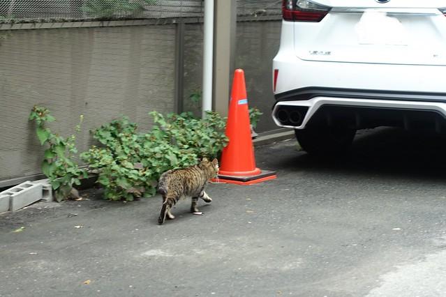Today's Cat@2019-07-02