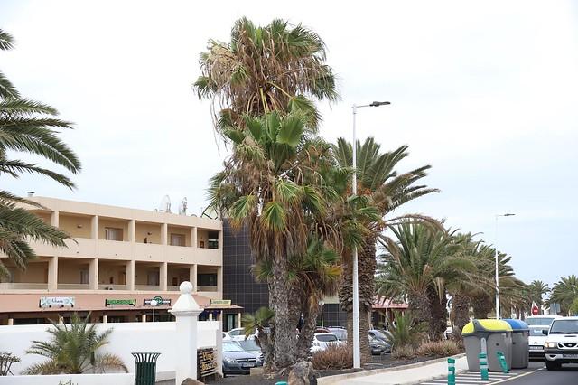 Palmeras en Costa Teguise 02-07-19
