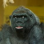 Los animales muestran sus mejores caras para un retrato. Lo único que hace falta, la suerte de estar en el momento adecuado.