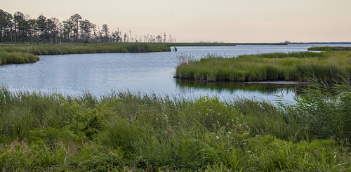 blackwater wildlife refuge