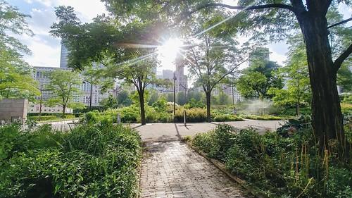 Chicago - Millennium Park Lurie Gardens