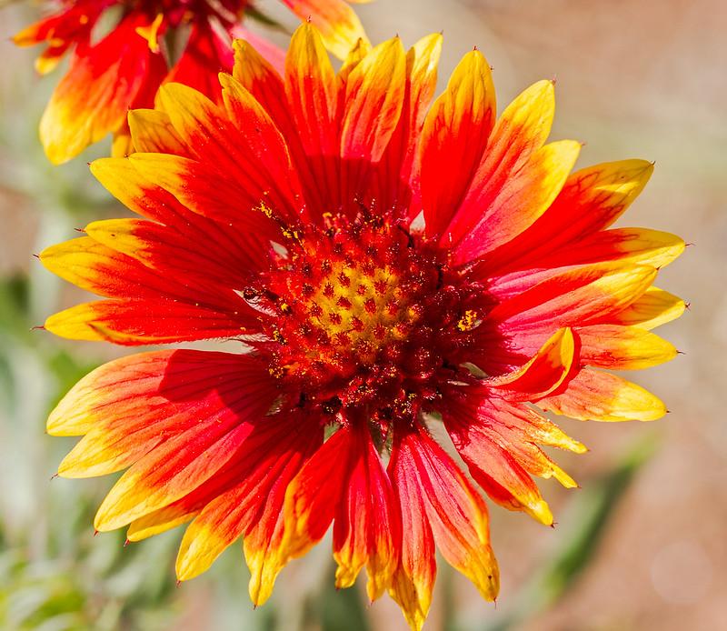 Wild-Flower-4-7D1-062819