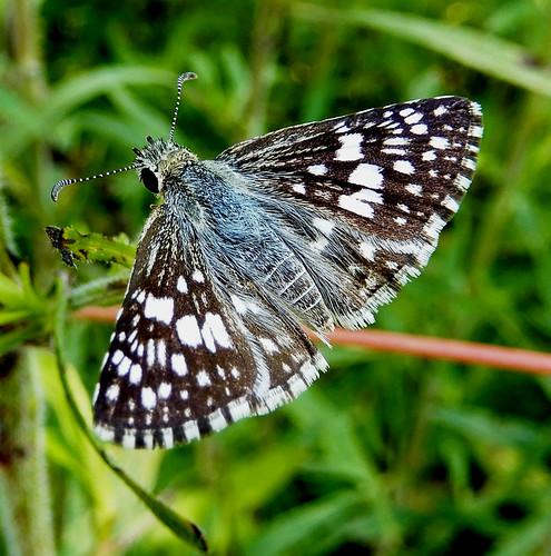 insect biology science nature diversity eyes antennae spots dark light carolina sc ilovenature usc