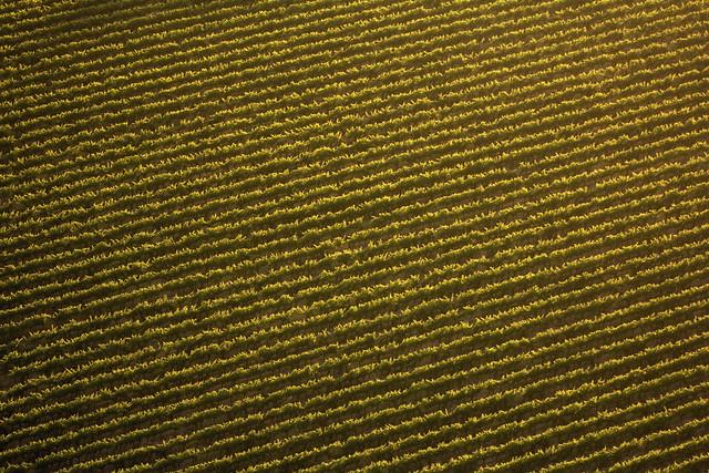 Vineyard-at-a-glance