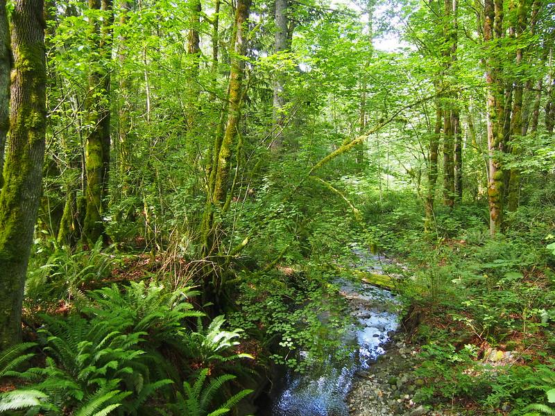 Hogarty Creek