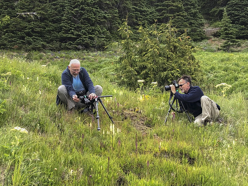 Jim and Walter photographing Platanthera dilatata var. dilatata (White Bog orchid)