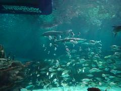 Ripley's Aquarium Of The Smokies - Gatlinburg, Tennessee (49)