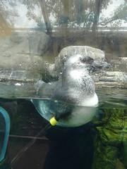Ripley's Aquarium Of The Smokies - Gatlinburg, Tennessee (99)