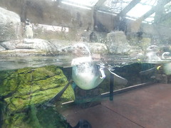 Ripley's Aquarium Of The Smokies - Gatlinburg, Tennessee (93)