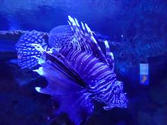 Ripley's Aquarium Of The Smokies - Gatlinburg, Tennessee (75)
