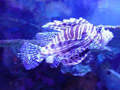 Ripley's Aquarium Of The Smokies - Gatlinburg, Tennessee (69)