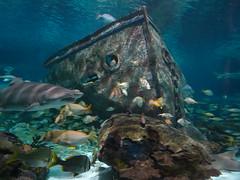 Ripley's Aquarium Of The Smokies - Gatlinburg, Tennessee (56)