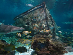 Ripley's Aquarium Of The Smokies - Gatlinburg, Tennessee (55)