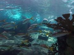Ripley's Aquarium Of The Smokies - Gatlinburg, Tennessee (38)