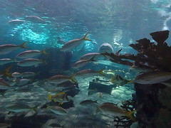 Ripley's Aquarium Of The Smokies - Gatlinburg, Tennessee (37)