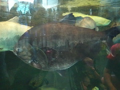 Ripley's Aquarium Of The Smokies - Gatlinburg, Tennessee (17)