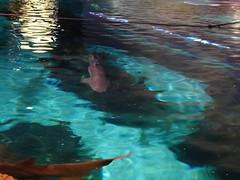 Ripley's Aquarium Of The Smokies - Gatlinburg, Tennessee (12)