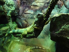 Ripley's Aquarium Of The Smokies - Gatlinburg, Tennessee (5)