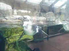 Ripley's Aquarium Of The Smokies - Gatlinburg, Tennessee (94)