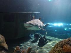 Ripley's Aquarium Of The Smokies - Gatlinburg, Tennessee (26)