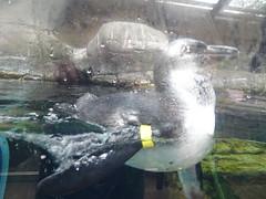 Ripley's Aquarium Of The Smokies - Gatlinburg, Tennessee (98)