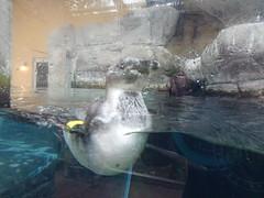Ripley's Aquarium Of The Smokies - Gatlinburg, Tennessee (96)