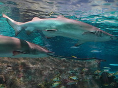 Ripley's Aquarium Of The Smokies - Gatlinburg, Tennessee (64)