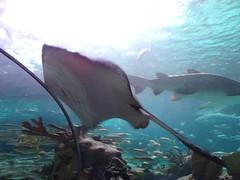Ripley's Aquarium Of The Smokies - Gatlinburg, Tennessee (46)
